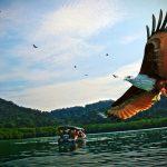 eaglefeedinglangkawi2018