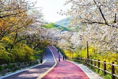 musim bunga di korea