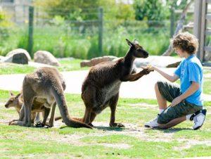 pakej_ke_melbourne_australia